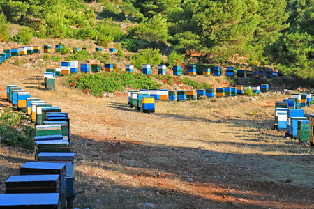 Beehives in a valley near the forest in Lefkada, Greece