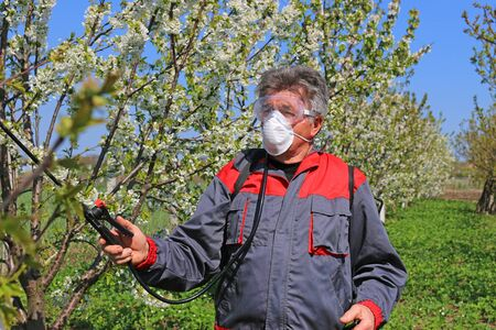 Agricultural senior worker in a blossom cherry orchard spraying pesticide to protect against disease and insects Imagens - 140519896