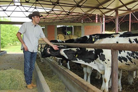 Successful farmer works on a livestock farm and takes care of the cows in the dairy industry