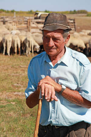 Portrait of a senior shepherd leaning on his staff with a flock of sheep on a farm