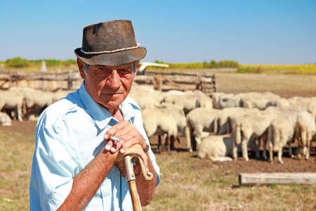 Portrait of a senior shepherd leaning on his staff with a flock of sheep on a farm, smokes a cigarette