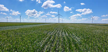 Aerial view of wind turbines in corn field. Beautiful summer landscape with wind farm and clouds in the blue sky. Energy production with clean and renewable energy Imagens