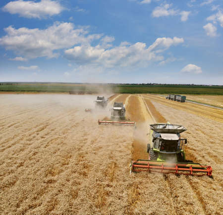Aerial view of wheat harvest. Landscape view from above taken from a drone, three combine harvesters working on wheat field