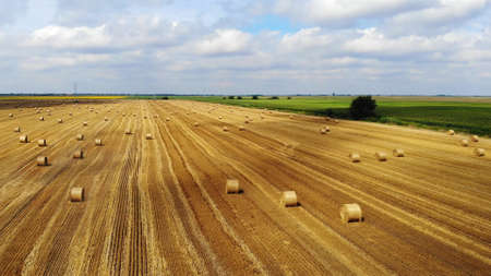 Aerial view crop wheat rolls of straw in field. Landscape view from above taken from a drone after wheat harvested. Agriculture farm rural aerial, bread production concept Imagens