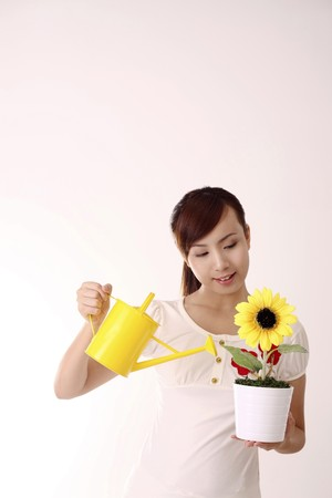 Woman watering a pot of sunflower Stock Photo
