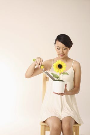 Woman planting sunflower in pot photo