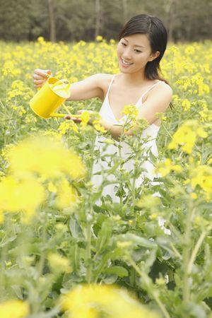Woman watering oilseed rape photo