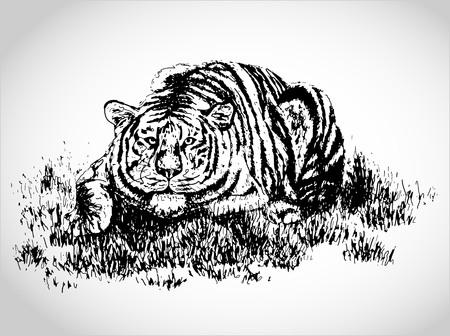 tigre bebe: Tigre en hierba ilustración