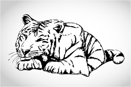 Small white tiger illustration