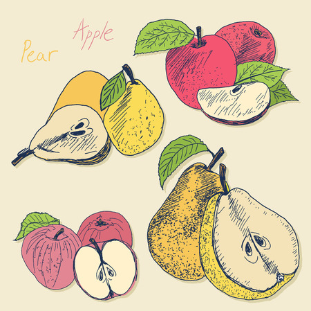 Sketch apple and pear vector illustration - whole and sliced by half