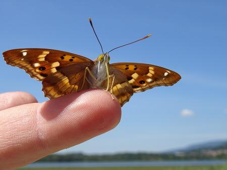 01: Butterfly (01)