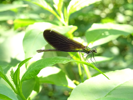 black: black Dragonfly Stock Photo