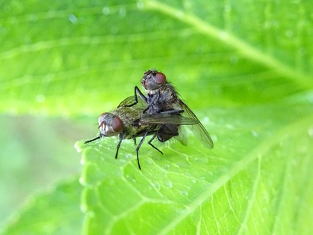 Two flies during playback