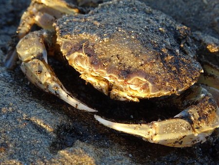 Close up of a crab
