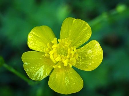 yellow flower Zdjęcie Seryjne