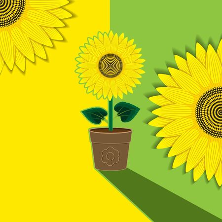 Yellow-green plant background flower sunflower potted. Background, banner, label, cover.
