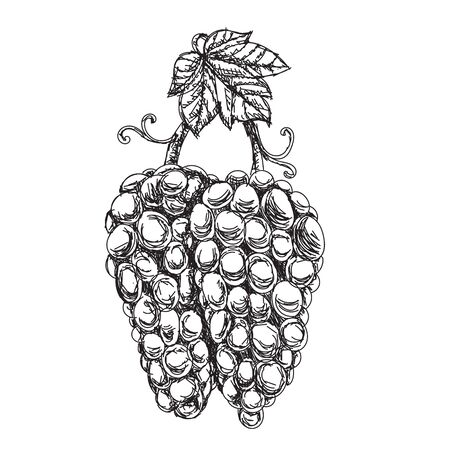 Monochrome Illustration grape bunches and leaves isolated on white background. Stock Illustratie