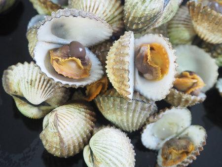 shellfish: shellfish