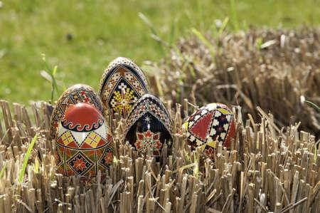 Eggs on some dried grass with shallow depth of field. Zdjęcie Seryjne