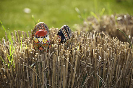 Three eggs on dried grass shallow depth of field. Stock Photo
