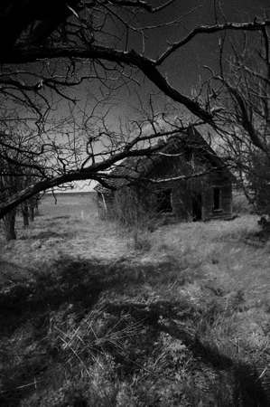 Old house that has been abandoned all the tree have died , he photo turned into a Black & White image.