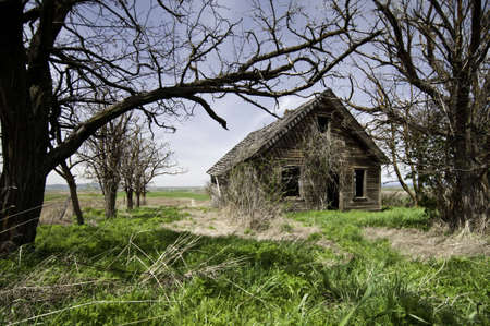 abandoned house: Home that has been left and run down tree have all died grass is over grown.