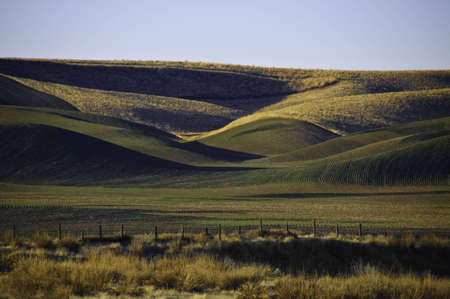 Rolling farm fields in palouse, The winter wheat has been planted.