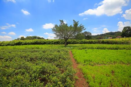 rural side scenery 版權商用圖片