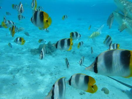 bora: Bora Bora Stock Photo