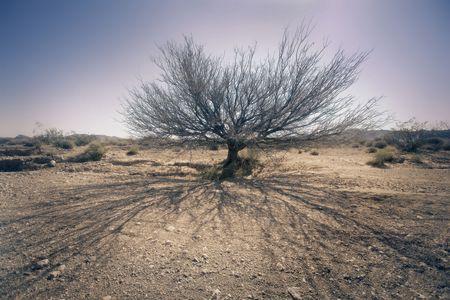 Dead Tree in Nevada