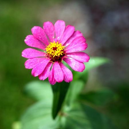 beautiful daisy flower background Stock Photo