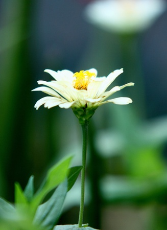 beautiful daisy flower background Stock Photo