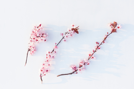 Spring blooming twigs on a white background