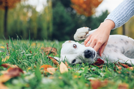 Happy dog with woman in the autumn park
