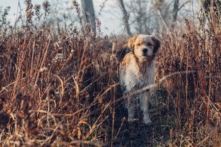 Young hunting dog in the autumn forest