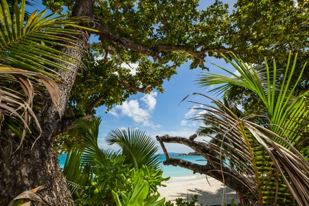 view from the jungle with tropical plants to a beautiful beach with turquoise sea and blue sky