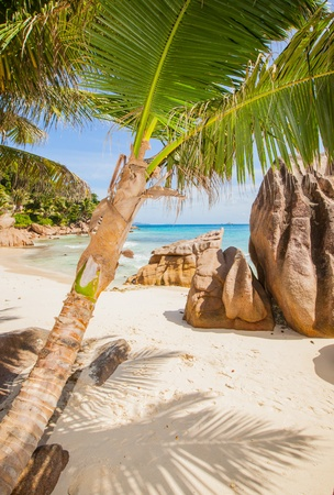 coconut palm at a tropical beach of La Digue, Seychelles with granite rocks in the background