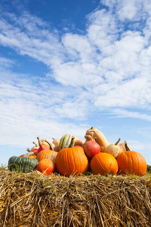 pile of pumpkins on a bale of straw under a blue sky in harvest