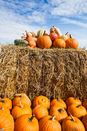 fall festival: pile of pumpkins on a bale of straw under a blue sky in harvest