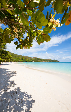 praslin: view over a tropical beach with exotic trees, white sand and a turquoise indian ocean under a blue sky, Praslin, Seychelles Africa Stock Photo