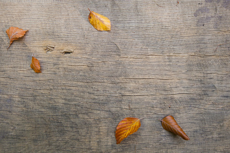 background autumn leaves on a wooden board