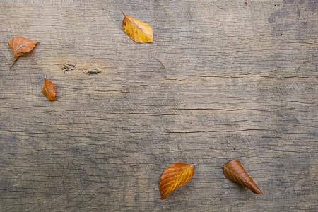 hojas secas: Fondo de las hojas de oto�o en una tabla de madera