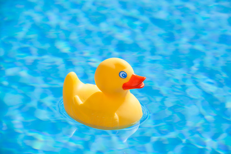 swimming to float: little yellow rubber duck floating in the blue water of a swimming pool