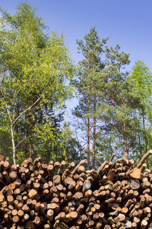 depletion: stack of wood and forest trees Stock Photo