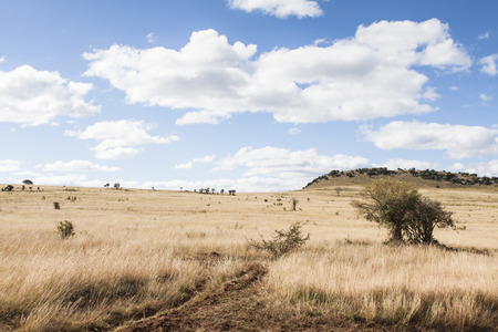 landscape with dry grass and bush land of Ithala game reserve, South Africa