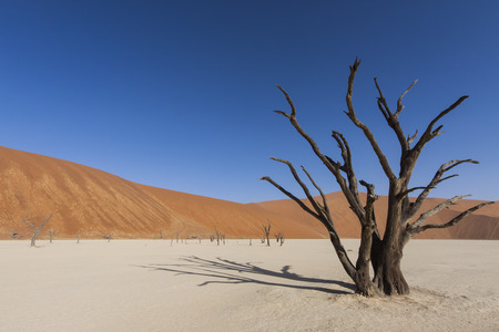 dead tree  and a red sand dune in the Namib desert, Dead Vlei, Namib Naukluft Park, Namibia, Africa Stock Photo