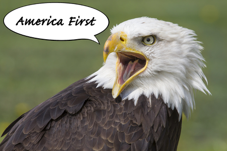 political concept with an american bald eagle with open beak and a speech bubble with the words america first Foto de archivo
