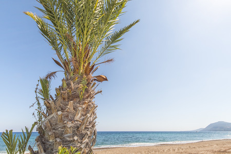 travel background with a date palm, island beach and a blue sky, cyprus, Greece, Europe