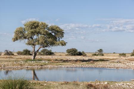 Árido paisaje del desierto africano con un árbol de espina de camello y un abrevadero en el Parque Nacional de Hwange, Zimbabwe, África Foto de archivo
