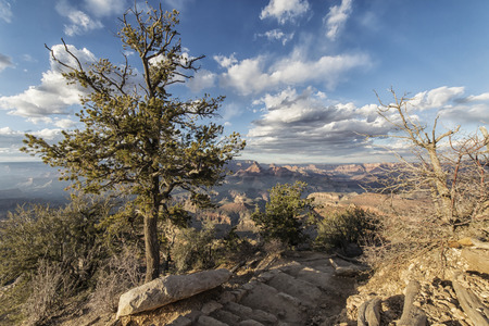 grand canyon south rim landscape in the afternoon, Arizona, USA
